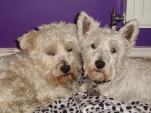 Suki (on the right) snuggles up with her new best pal Butters. Suki was adopted by a lovely couple in Meath in 2009
