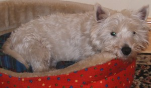 Robbie relaxing in bed! Robbie was rehomed to a lovely couple in Limerick in December 2009
